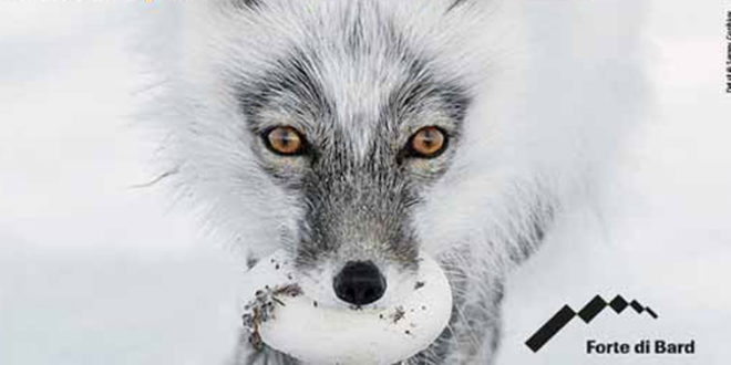 L'anteprima italiana del Wildlife Photographer of the Year al Forte di Bard